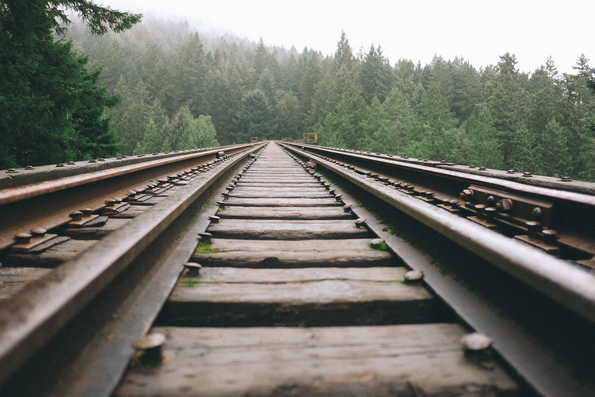 train tracks with evergreen trees
